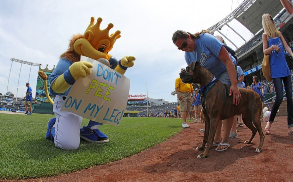 Hot dog incident could affect how mascots interact with sports fans