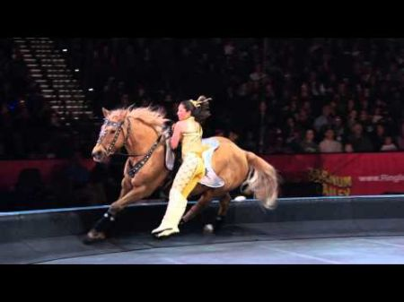 Five reasons the circus will always be around