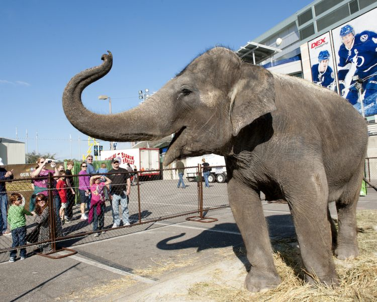 The best circus animals, ranked