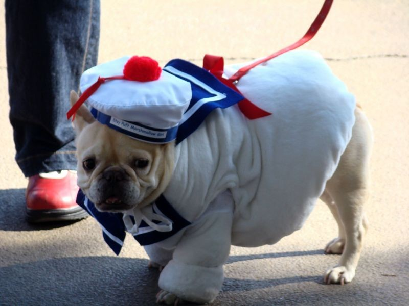 The best Halloween pet events in Denver