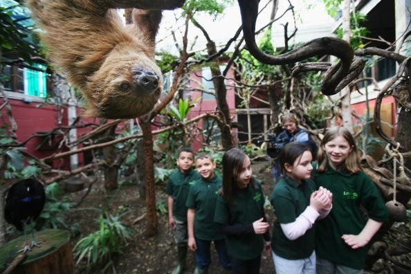 An ultimate kids' guide to three fun attractions in The Big Easy