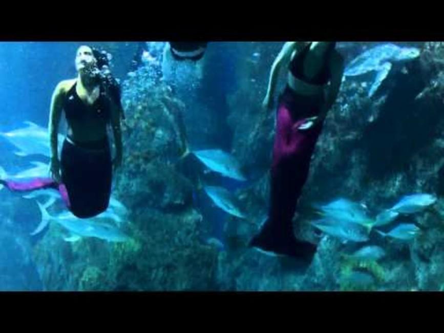 Denvers Downtown Aquarium Is A Dining Entertainment And Education Hotspot