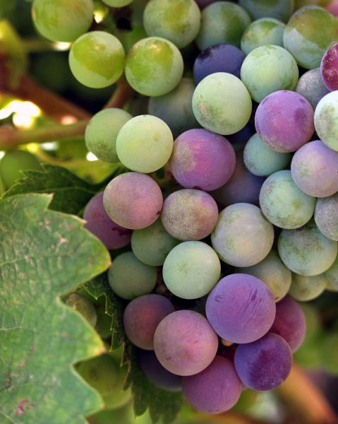 San Fernando Valley area's best wine bars