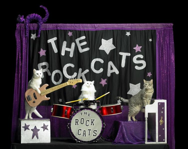 The Amazing Acro-Cats cat circus is coming to town