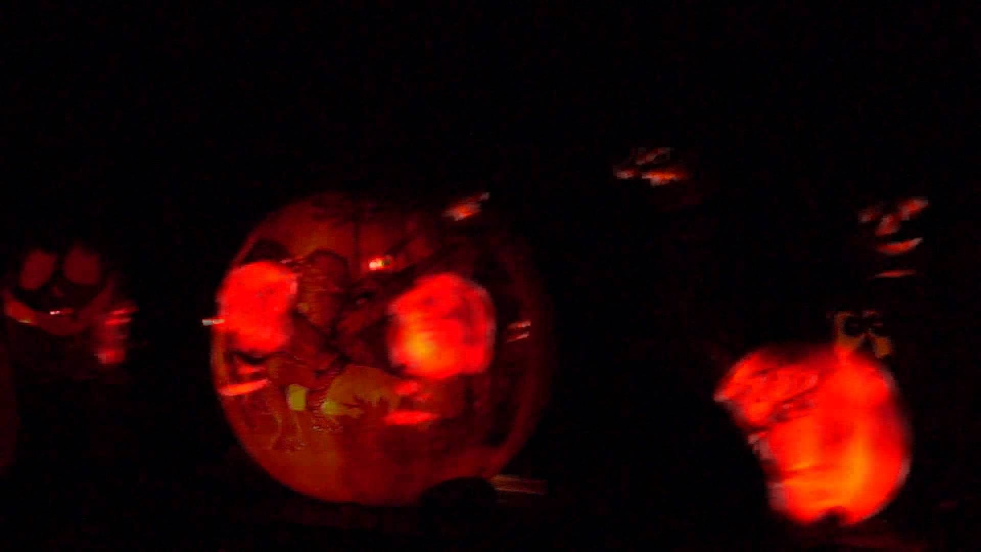 last week of jack-o-lantern spectacular at roger williams park zoo - axs