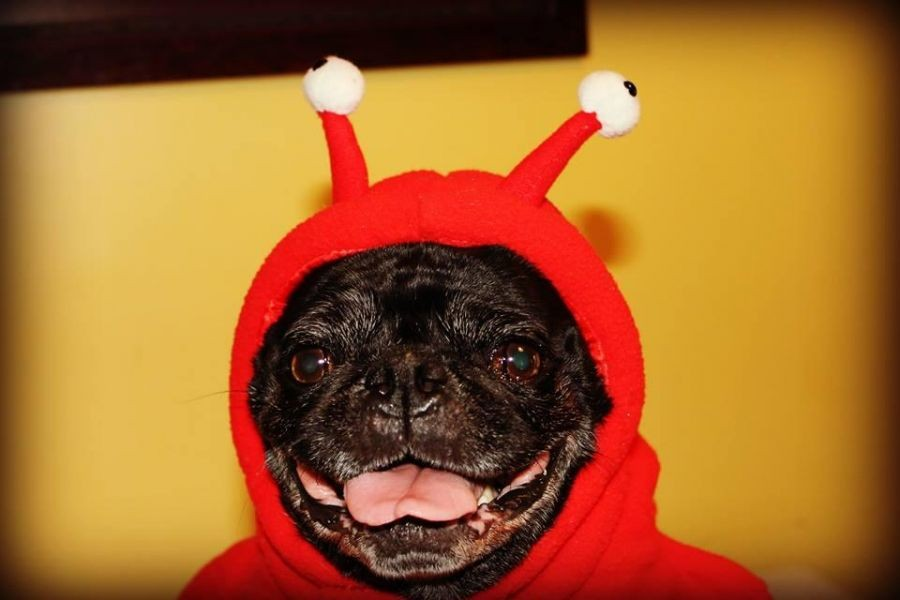 Best Halloween Pet Events In Columbus Ohio Axs