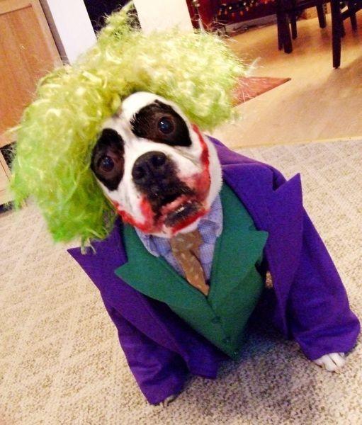Best Halloween pet events in Boston & Best Halloween pet events in Boston - AXS
