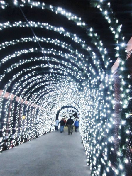 the 32nd annual pnc cincinnati zoo festival of lights half price nights can do