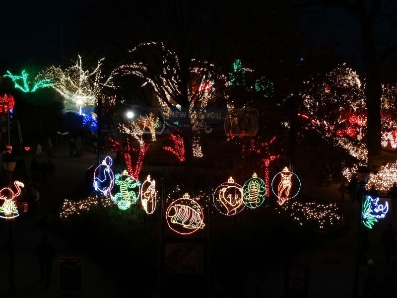 lights before christmas display at toledo zoo should be seen by everyone - Christmas Lights At The Zoo