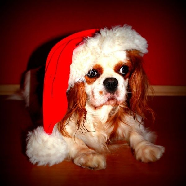 Best Places In Cleveland To Buy Christmas Sweaters For Your Pets Axs
