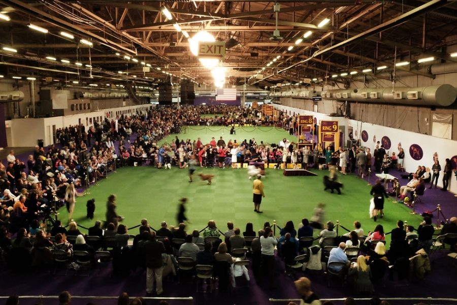 The 139th Westminster Kennel Club Dog Show Airs Tonight & Best in Show Tomorrow!