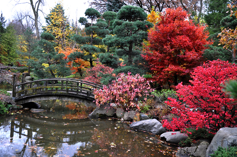 Anderson Japanese Gardens Opens For The Season Offers