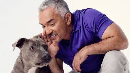 Cesar Millan will bring his live-action dog training show to theCity National Grove of Anaheim in Anaheim, California on Jan. 13.
