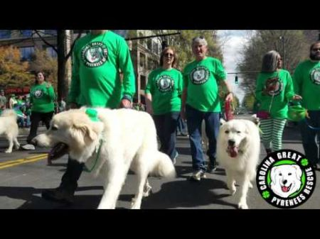 Best free family St. Patricks Day events in Charlotte 2017