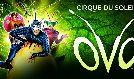Cirque du Soleil - OVO tickets at Royal Albert Hall in London