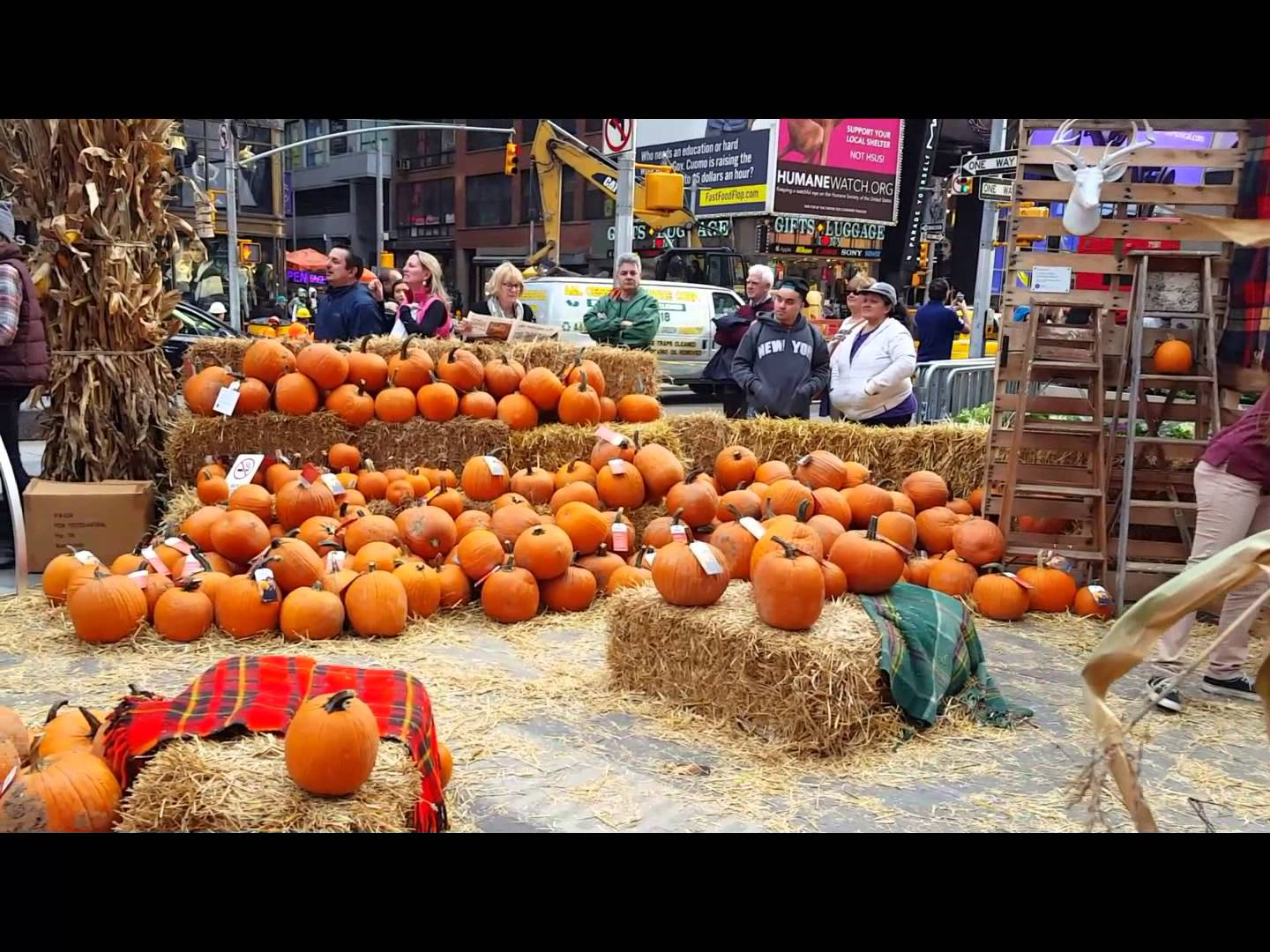 Corn mazes and pumpkin patches near New York 2017