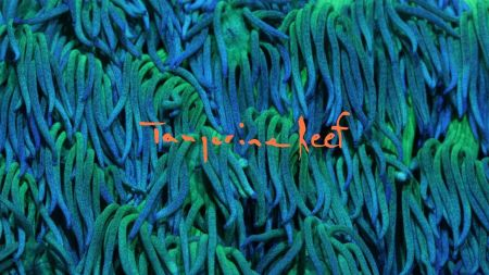Watch: Animal Collective release audiovisual album 'Tangerine Reef'