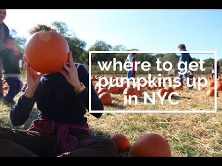 Corn mazes and pumpkin patches near New York 2018
