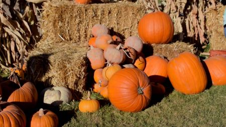 Corn mazes and pumpkin patches near Salt Lake City 2018